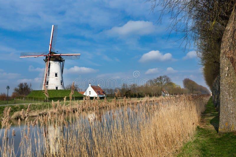 Damme och väderkvarn i Flanders arkivbilder