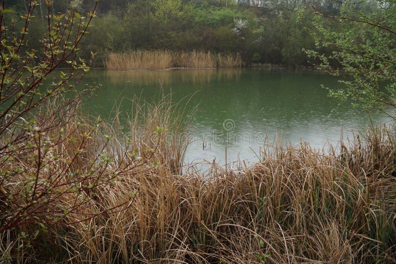 Dammet i parkerar med gräs royaltyfri foto