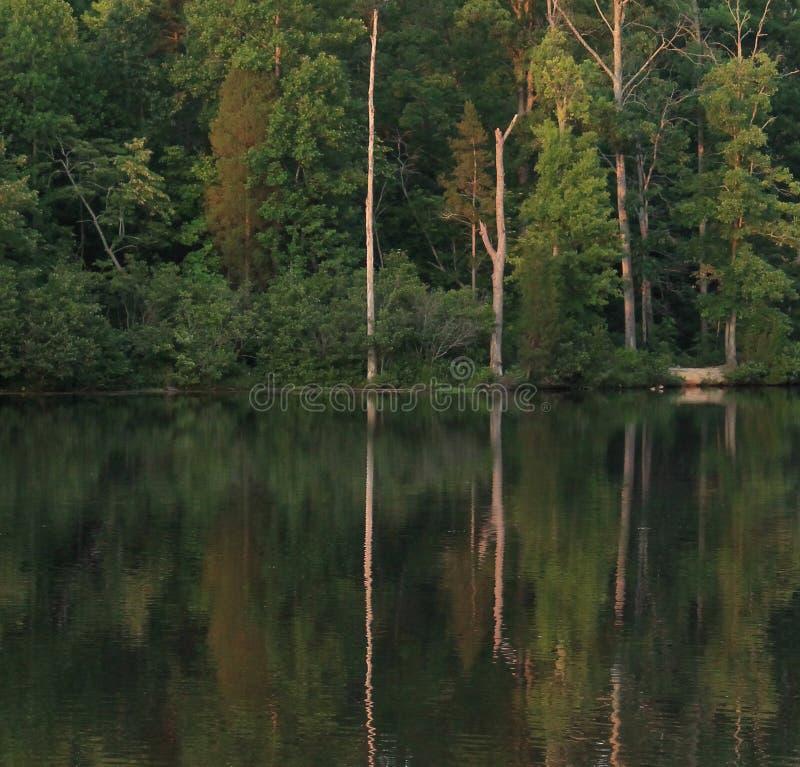 Dammet reflekterar arkivfoto
