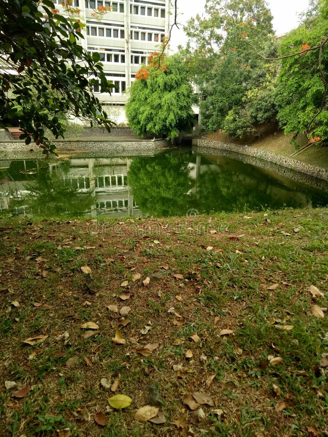 Dammgräsplan arkivbilder