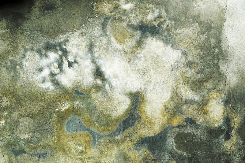 Damp grunge wall with mold royalty free stock images