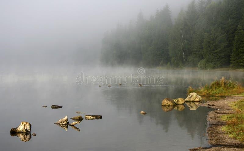 Dampfiger See und nebelhafter Wald stockfoto
