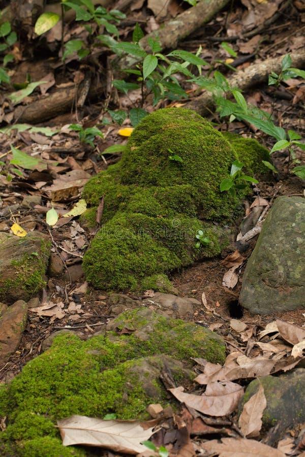 Download Dampness roślina obraz stock. Obraz złożonej z tekstura - 57672755