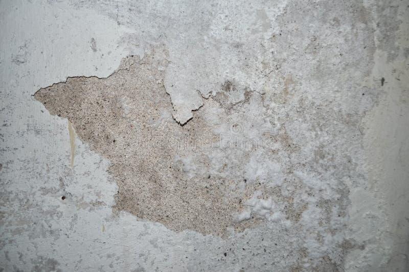 dampness wilgoć na ścianie obrazy stock