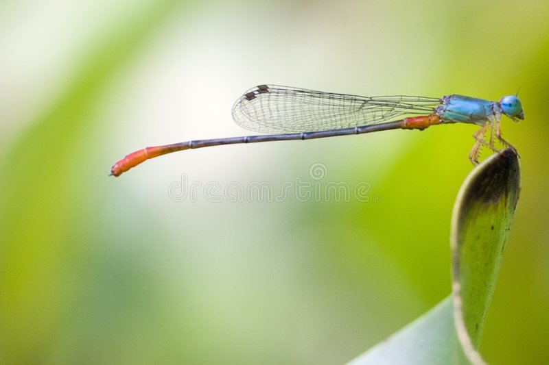 Damselfly stock image