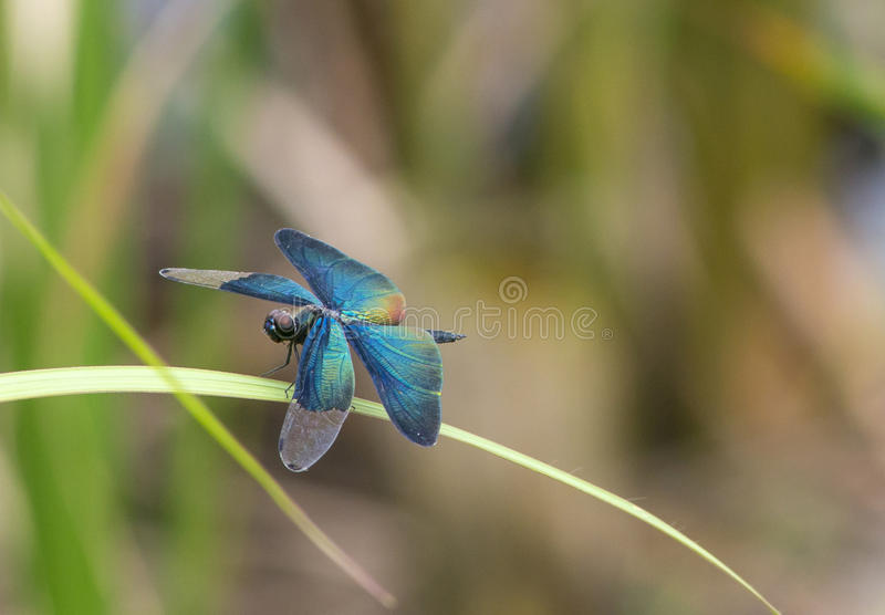 The damselfly in the Summer stock images