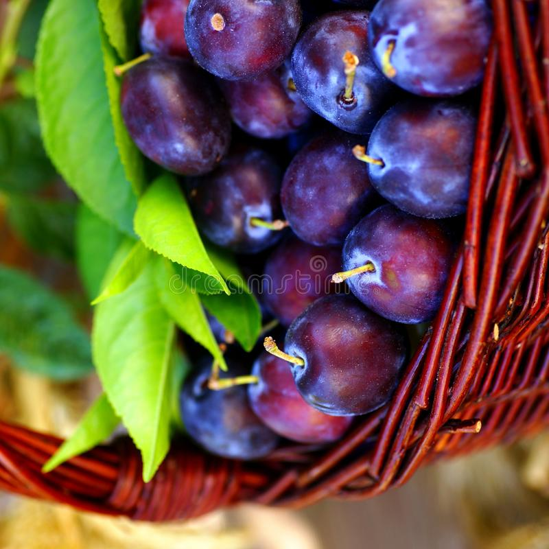 Free Damson Plums Stock Images - 24541914