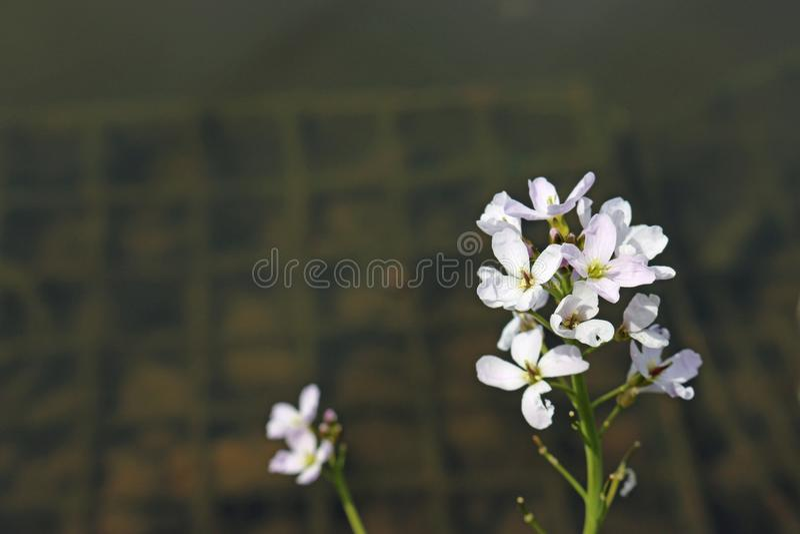 Damy bluzy kolec kwiaty zdjęcie stock