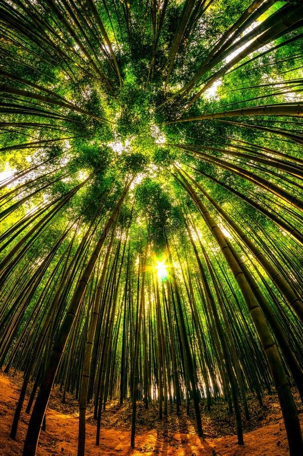 damyang bamboebos stock afbeeldingen