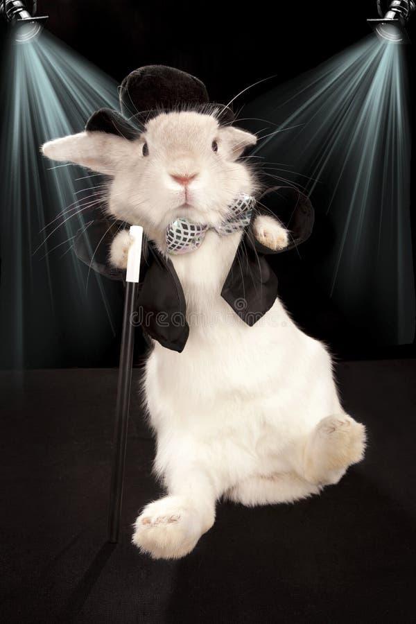 Dança do coelho no chapéu superior e no smoking com vara imagens de stock