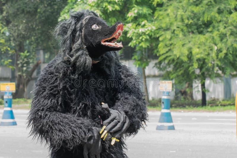 Dançarino popular vestido como um urso que marcha perto imagens de stock royalty free