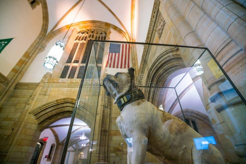 Dan hermoso de Yale University imagen de archivo libre de regalías