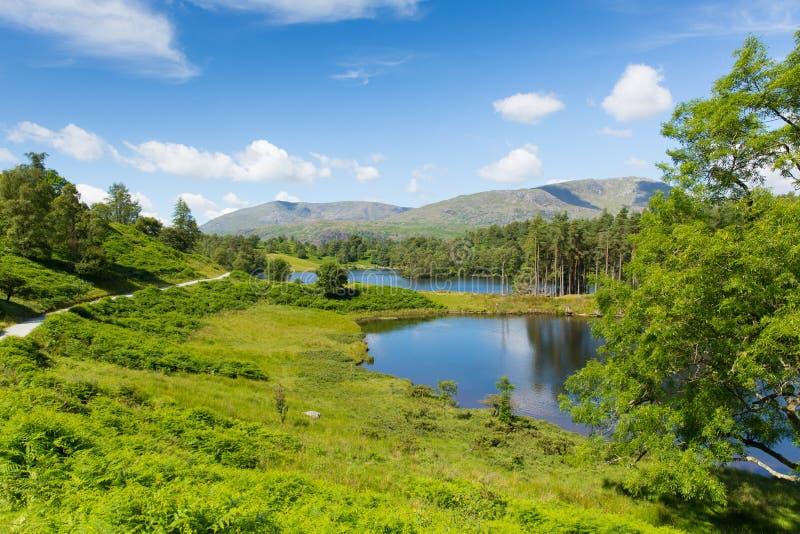Dan weg bij het Meerdistrict Cumbria Engeland het UK van de Tarn Hows op een mooie zonnige de zomerdag stock foto's