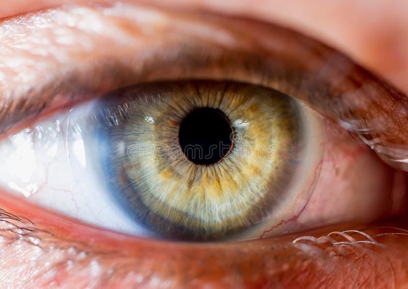 close up eye. close up Iris. very Close macro shot of an eyeball. pale green and yellow. contact lens stock photo