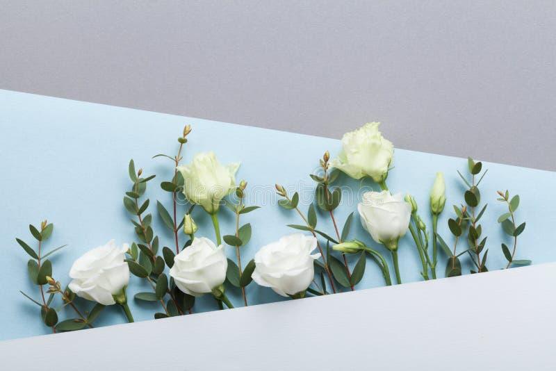 Dana sammansättning av dekorerade härliga vita blommor för det pappers- kortet och eukalyptussidor på bästa sikt för pastellfärga royaltyfria bilder