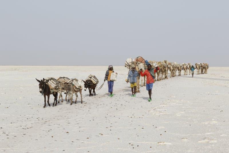 Danakil,埃塞俄比亚,2015年2月22日:在远处人从Danakil沙漠带领运输盐块的一辆骆驼有蓬卡车 免版税库存图片