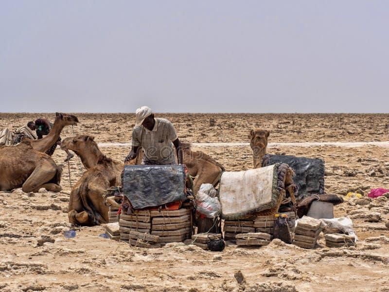 DANAKIL DEPRESSIE, ETHIOPIË, 29 APRIL 2019, is Afars waarschijnlijk de taaiste mensen in de wereld In de Danakil-depressie royalty-vrije stock fotografie
