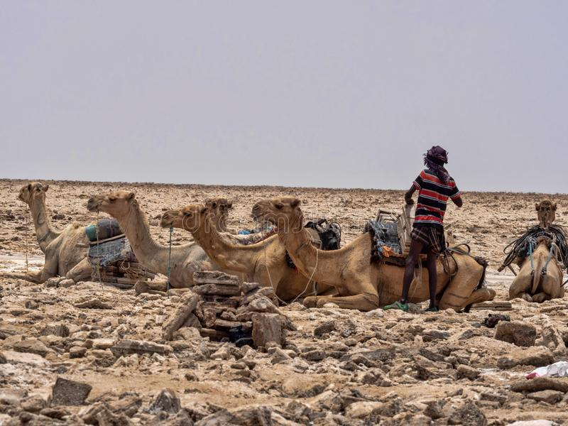 DANAKIL DEPRESSIE, ETHIOPIË, 29 APRIL 2019, is Afars waarschijnlijk de taaiste mensen in de wereld In de Danakil-depressie stock afbeelding