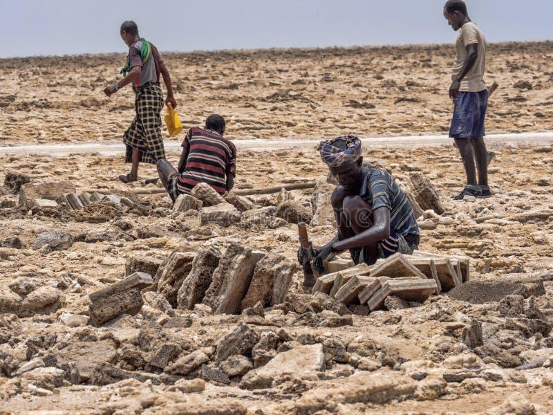DANAKIL DEPRESSIE, ETHIOPIË, 29 APRIL 2019, is Afars waarschijnlijk de taaiste mensen in de wereld In de Danakil-depressie stock afbeeldingen