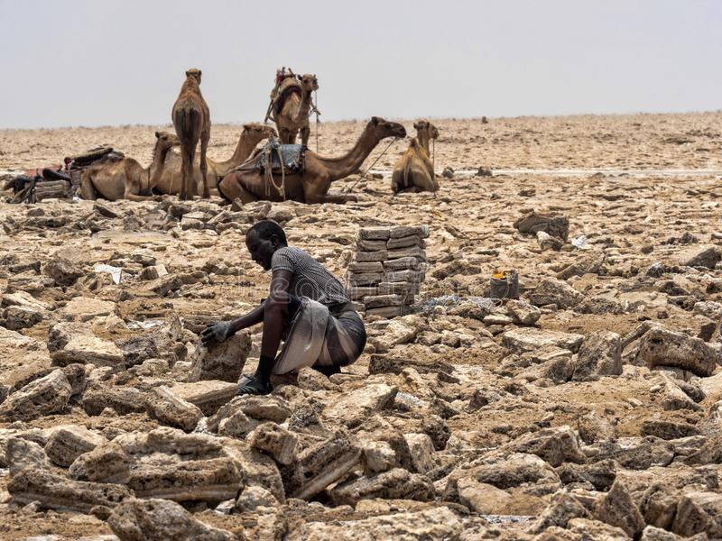 DANAKIL DEPRESSION,  ETHIOPIA, APRIL 29th.2019, The Afars are probably the toughest people in the world. In the Danakil depression. The Afars are probably the royalty free stock photos