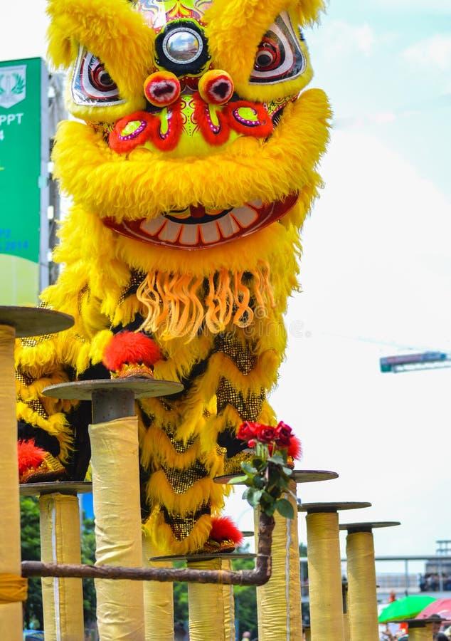 Dancing cinese giallo del leone sull'appiglio immagine stock libera da diritti