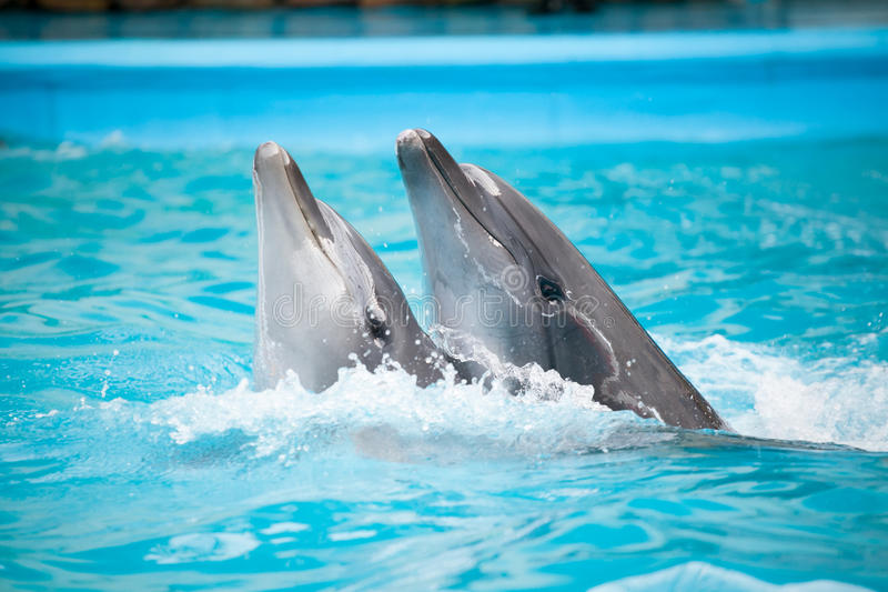Dancing dolphins stock photos