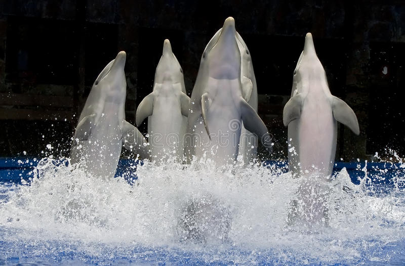 Dancing dolphins 1
