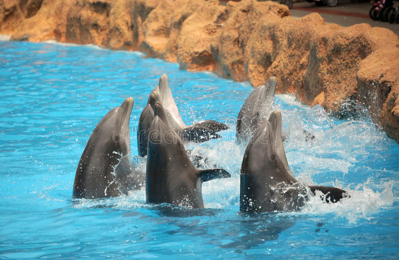 Dancing dolphins stock photography