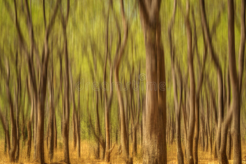 Dancing trees royalty free stock images