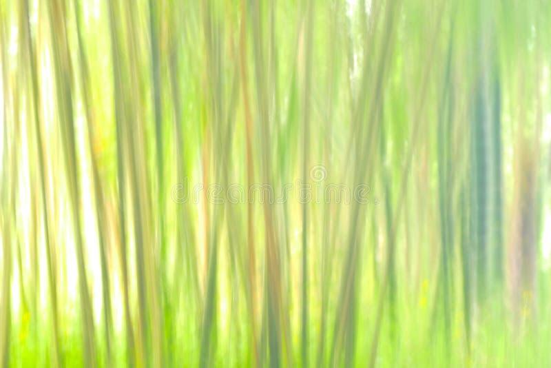 Dancingowe damy w lesie populus euphratica w pustyni obrazy stock