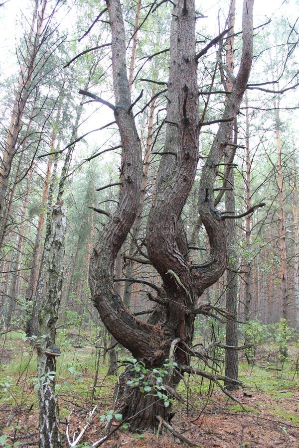 Dancingowy drzewo obraz stock