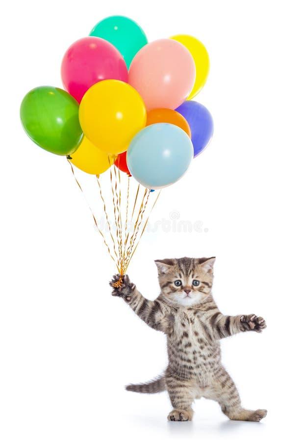 Dancingowy kot z przyjęcie urodzinowe balonami odizolowywającymi fotografia stock