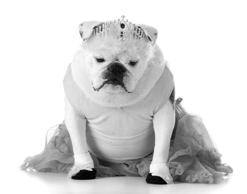 Dancingowy pies zdjęcia stock