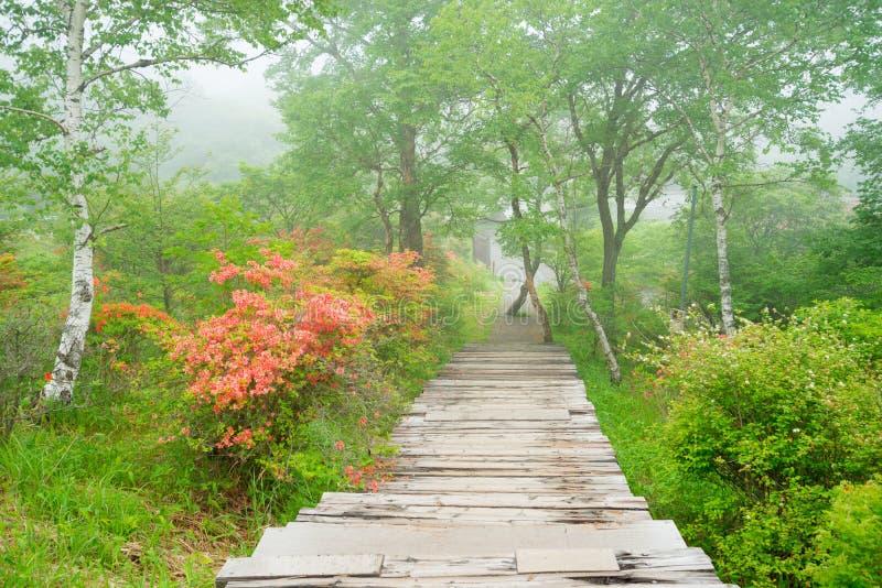Dand Rengetsutsuji de las pistas de senderismo fotografía de archivo