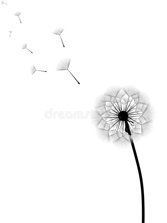 Dandelion. Vector illustration of dandelion with flying seeds isolated on white background