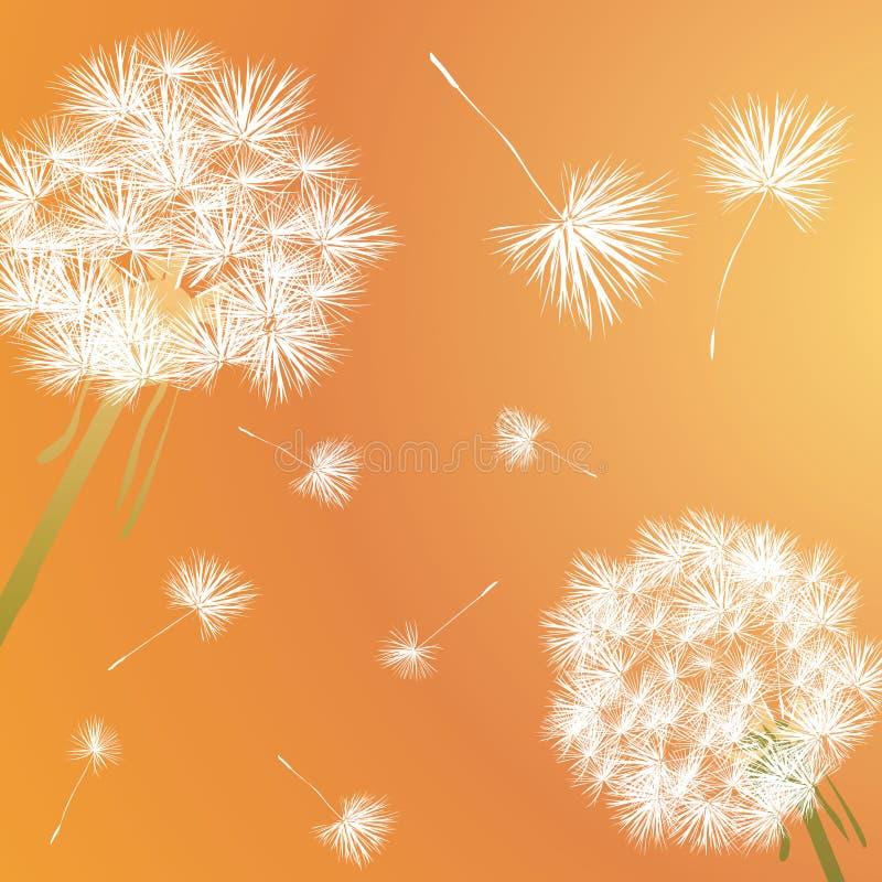 Download Dandelion stock vector. Illustration of fuzz, growth - 11660275