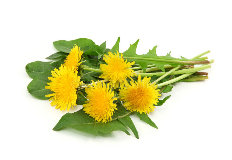 Download Dandelion stock image. Image of nobody, branch, plant - 14117575