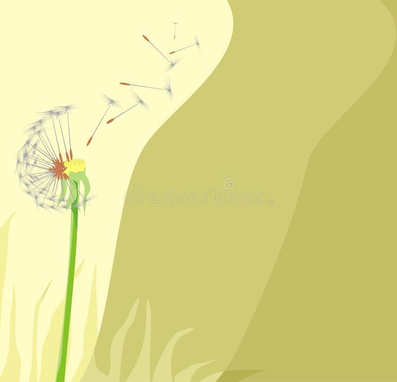 dandelion ilustracja wektor