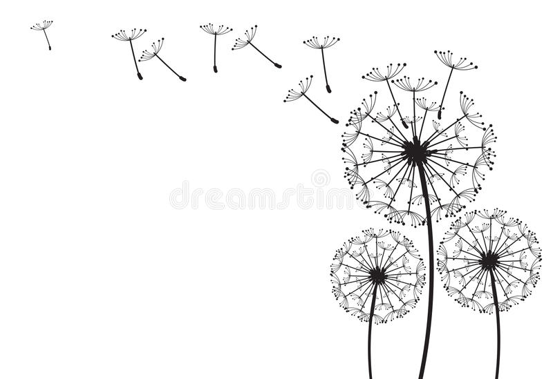 Dandelion royalty free illustration