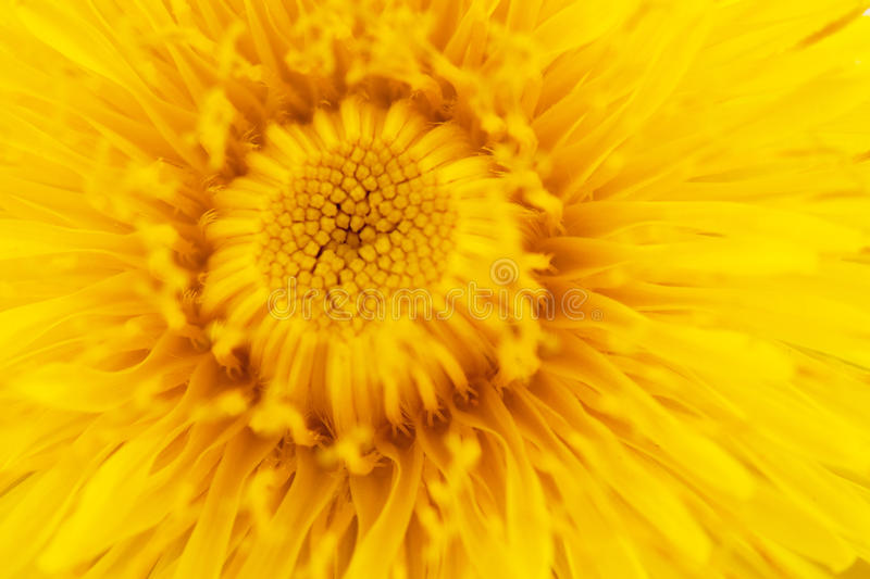 Download Dandelion stock photo. Image of dandelion, growth, detail - 28528674