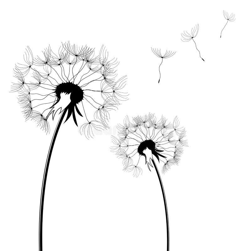 Download Dandelion Royalty Free Stock Photos - Image: 8428628