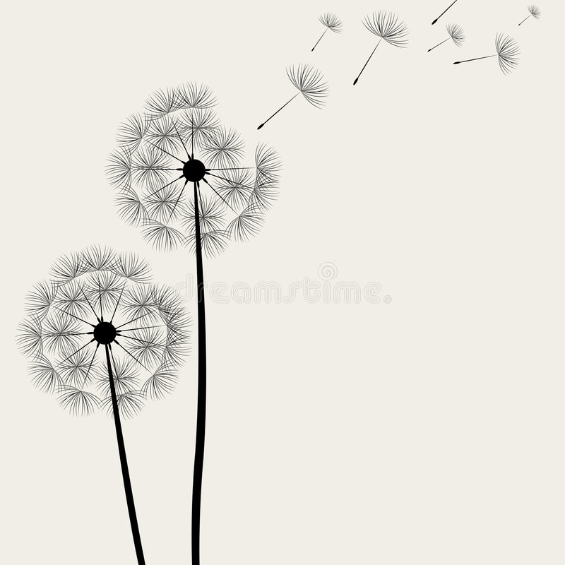 Dandelion. This image is a vector illustration and can be scaled to any size without loss of resolution. This image will download as a .eps file. You will need a