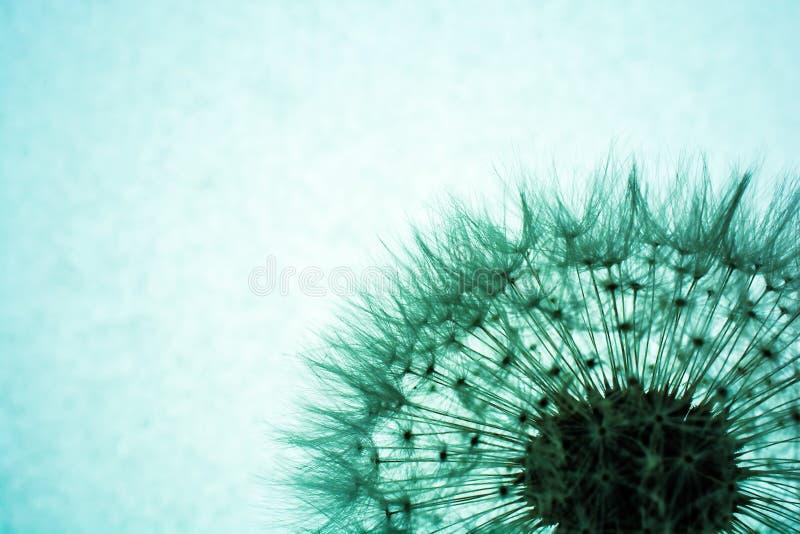 dandelion abstrakcjonistyczny kwiat z bliska obrazy stock