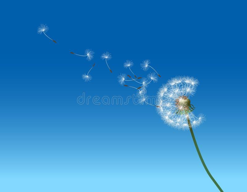 Dandelion Art vector illustration
