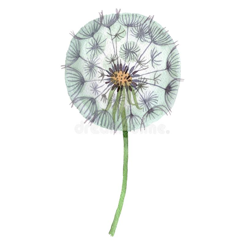 Free Dandelion Blowball With Seeds. Watercolor Background Illustration Set. Isolated Plant Illustration Element. Stock Images - 158186944