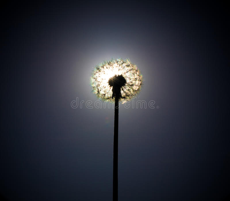 Download Dandelion Close The Sun Disc Stock Photos - Image: 13511833