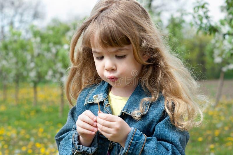 dandelion dziewczyna obrazy royalty free