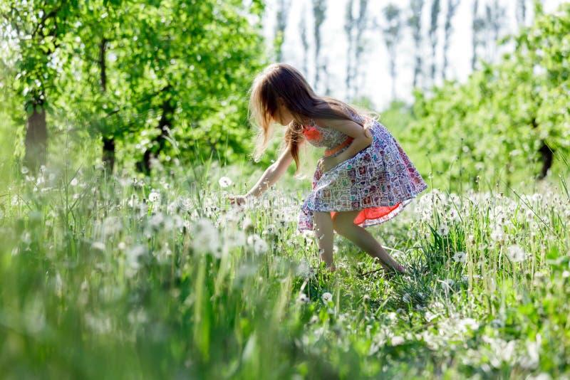 Dandelion dziewczyny dziecka śródpolnej białej pięknej szczęśliwej małej zieleni kwiatów dandelions natury parka łąkowy żółty ogr zdjęcie royalty free