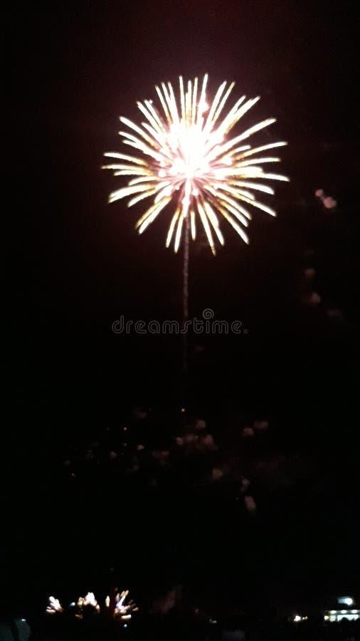 Dandelion fajerwerk zdjęcie stock