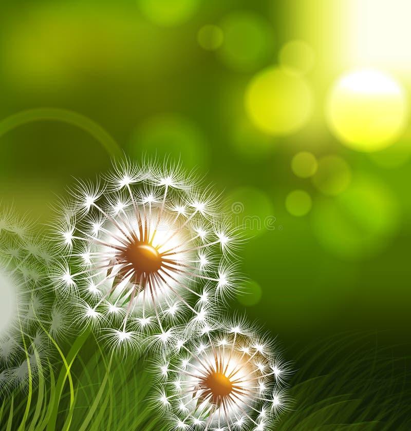 Dandelion field vector spring conceptual background vector illustration